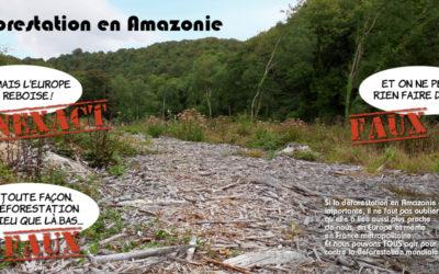 Incendie en Amazonie, l'arbre qui cache la forêt de la déforestation !
