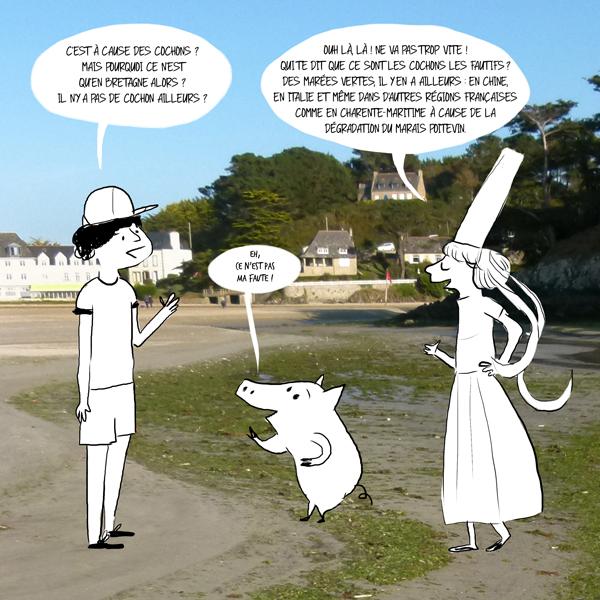 Les cochons ne sont pas la cause des marées vertes.