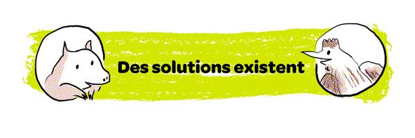 Des solutions existent pour limiter les algues vertes