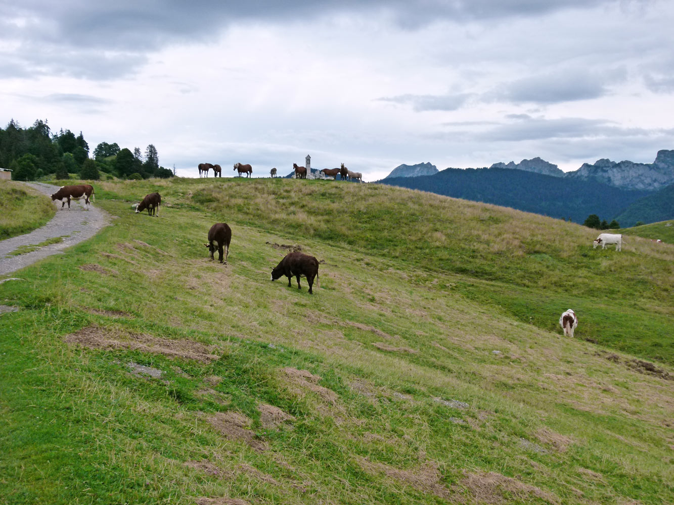 En vacances, près des troupeaux de vaches